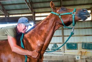 Darren Woller Horsemanship Vinnie